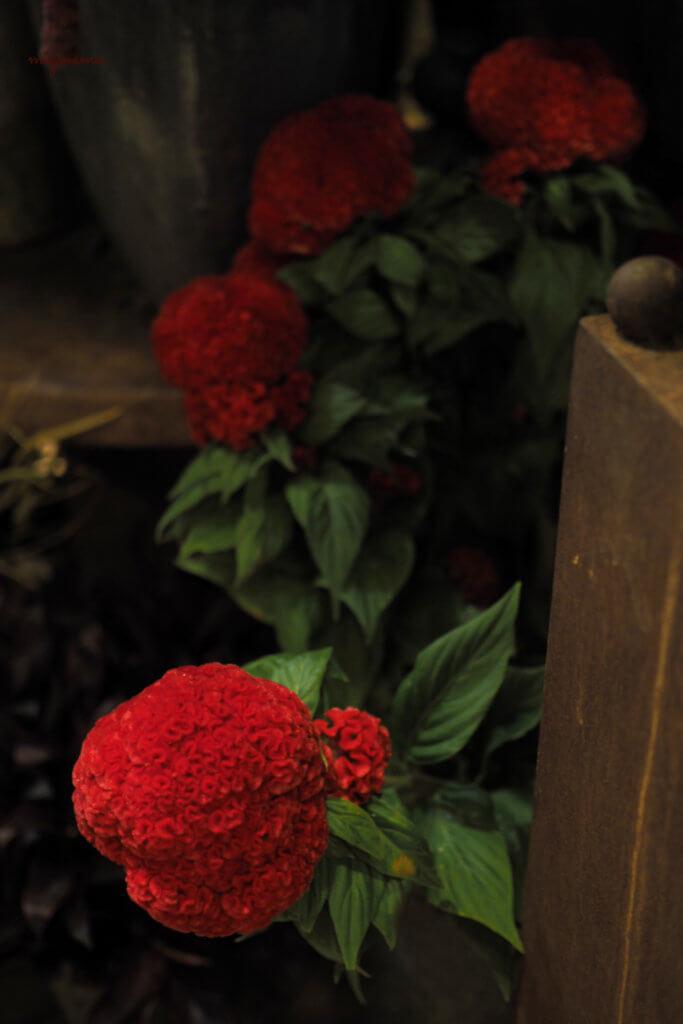 flowernoritake5