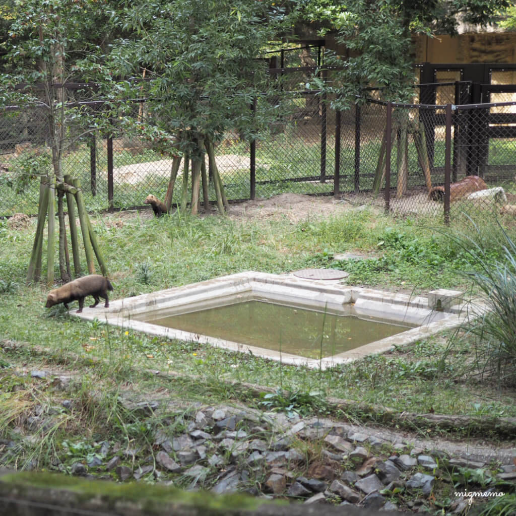 higashiyamazoo12