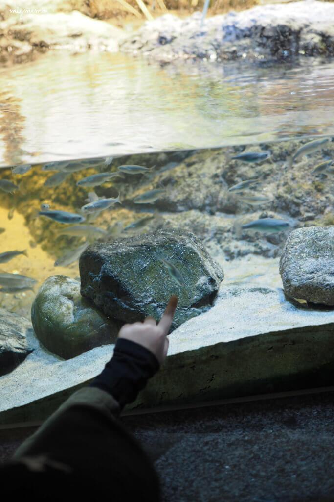 子らは初めての水族館でした。