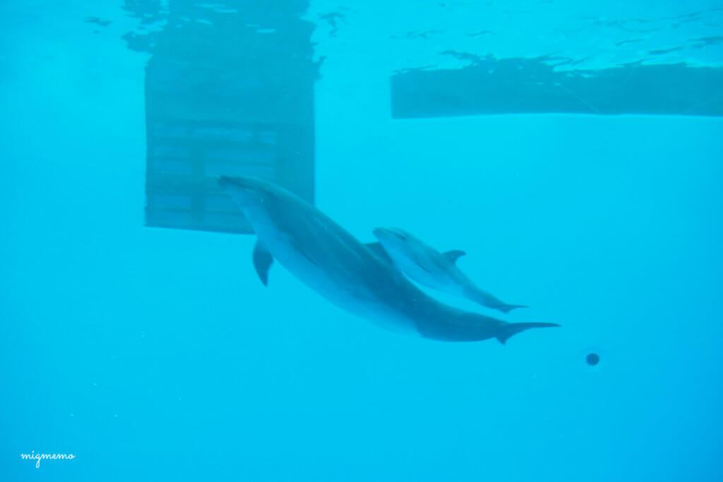 イルカになんとお子さんがいました!ぴったりくっついていてかわいいー。